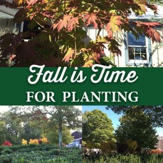 Fall is Time for Planting - Crocker Nurseries