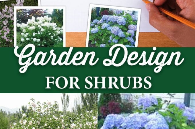 Garden Design for Shrubs that Flower February through November