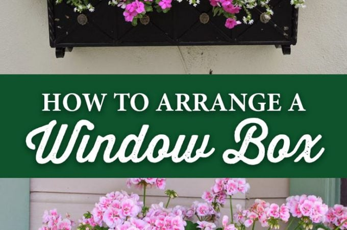 How to Arrange a Window Box