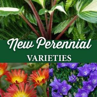 New Perennial Varieties - Crocker Nurseries