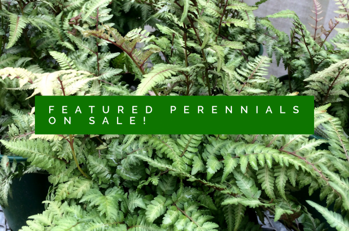 Featured Perennials Now 20% off