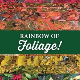 rainbow-foliage