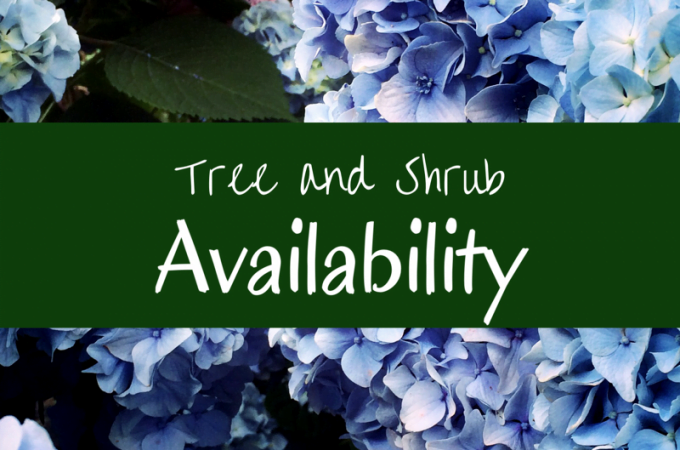 Tree and Shrub Availability June 24th – June 30th