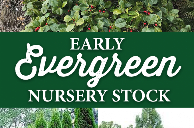 Early Evergreen Nursery Stock has Arrived!