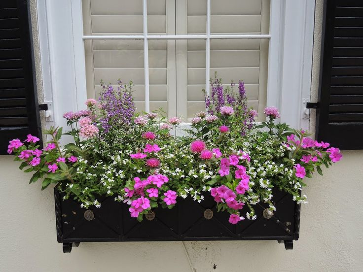 window boxes cape cod