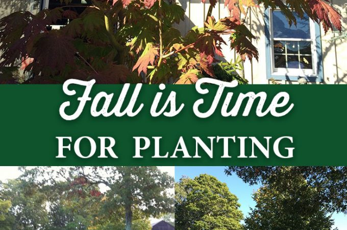 Fall is the Time for Planting