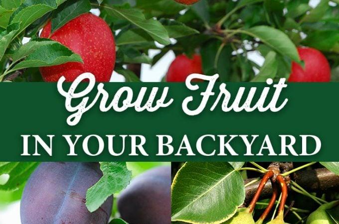 Grow Fruit in Your Backyard!