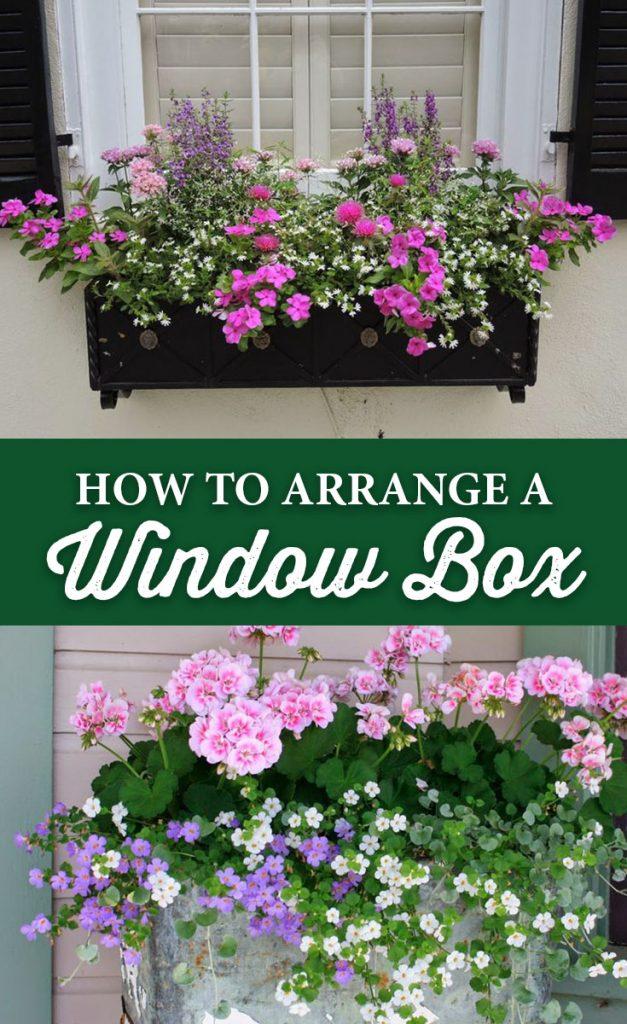 How To Arrange A Window Box Crocker Nurseries