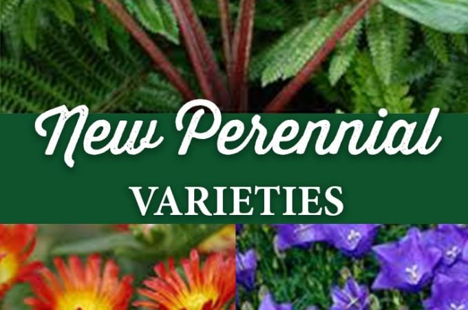 New Perennial Varieties are Here