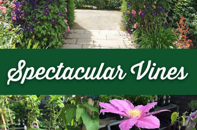 Spectacular Vines