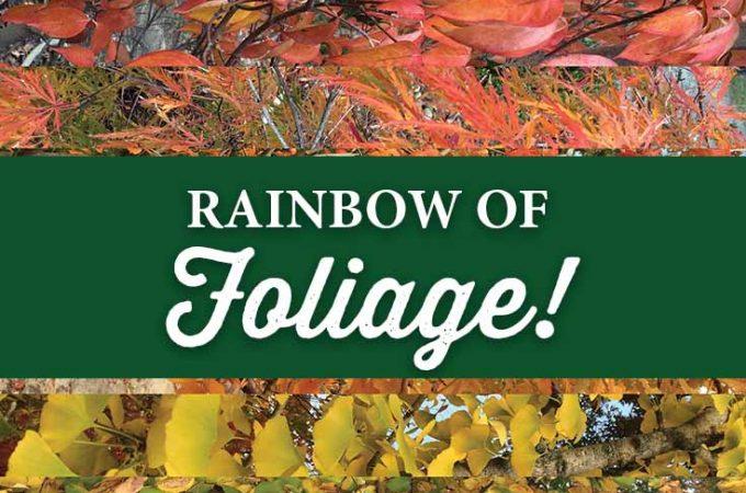 Rainbow of Fall Foliage