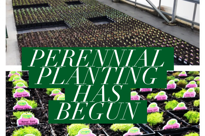 Perennial Planting has begun!