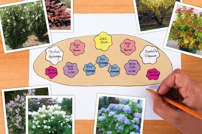 Garden Design For Flowering Shrubs Crocker Nurseries