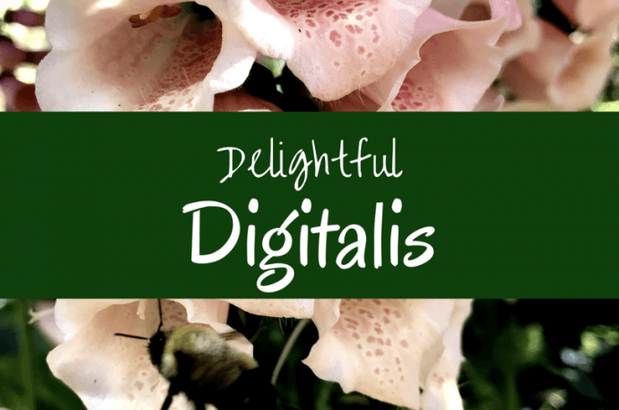 Delightful Digitalis