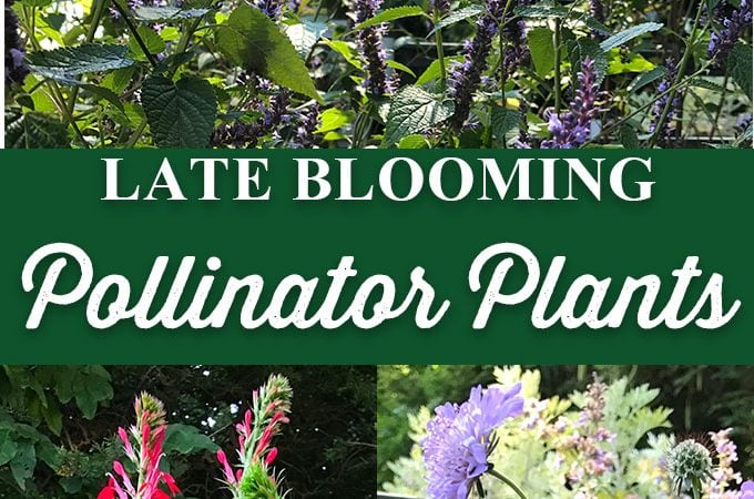 Late Blooming Pollinator Plants