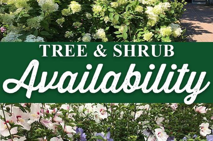 Tree and Shrub Availability