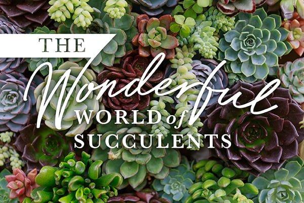 Wonderful-succulents