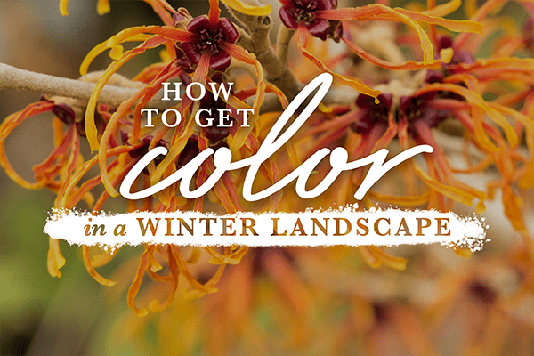 How to get Color in a Winter Landscape