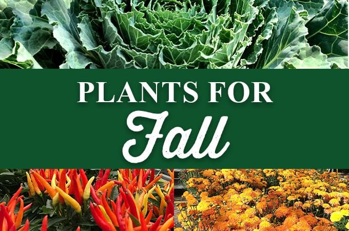 Plants for Fall!