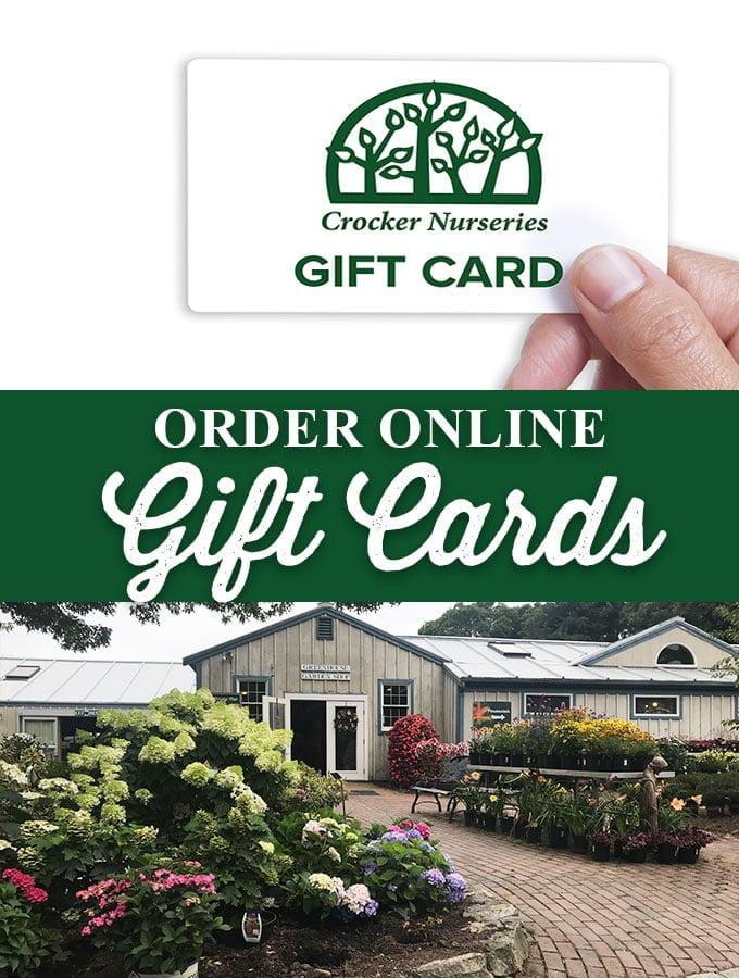 Gift-cardsArtboard-1