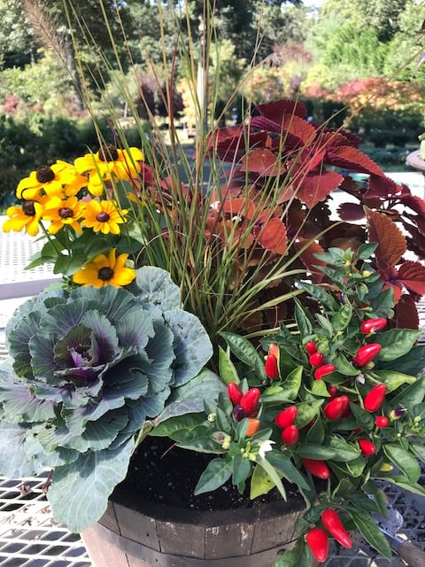 Fall Container Garden Classes