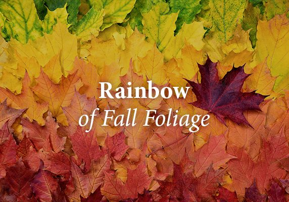 Fall Folliage